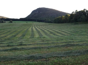 Making hay under watchful Wheeler Mountain